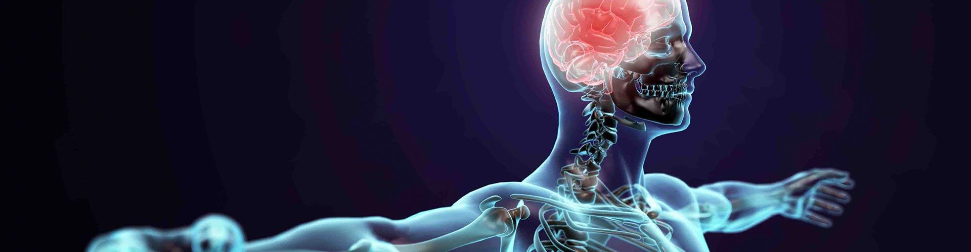cns diseases parkinson stroke bbb passage microdialysis